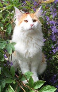 yot in de tuin juni 2015